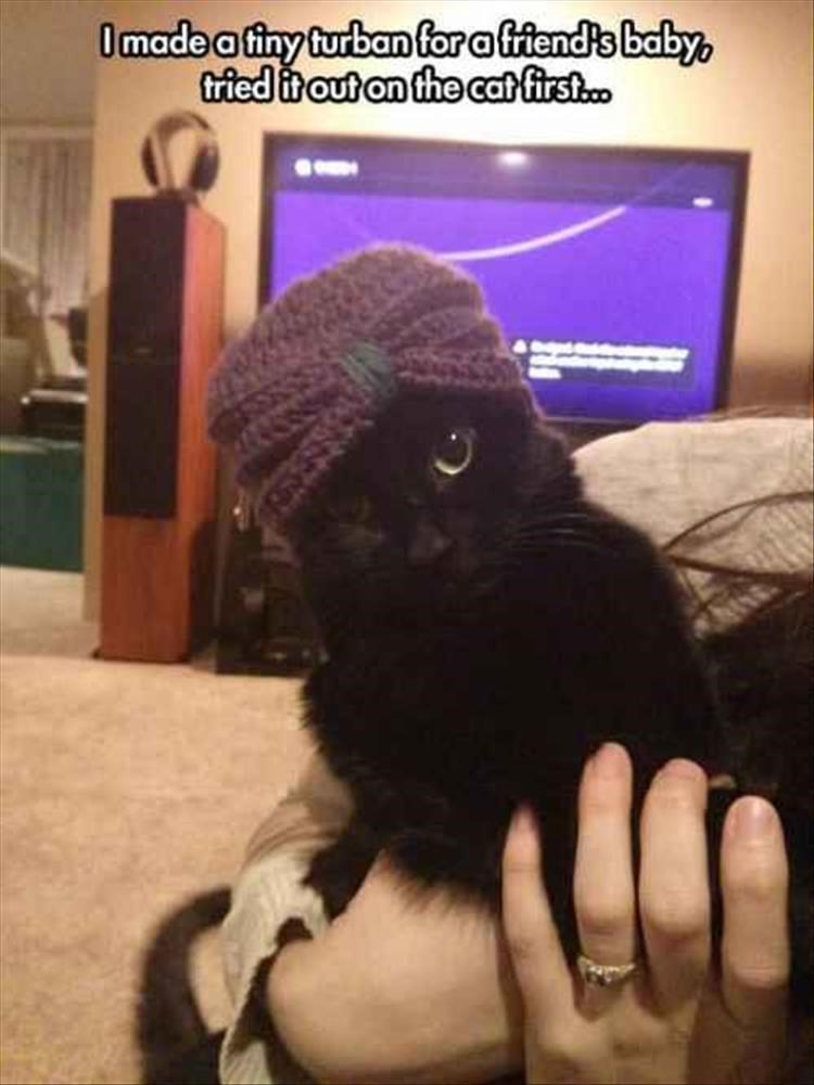 Cat - Omadea finy turban for affiends baby triedit out an the catfirst..