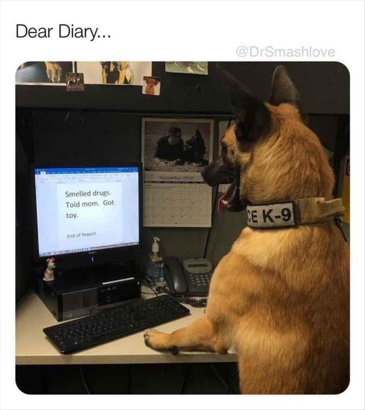 Canidae - Dear Diary... @DrSmashlove Smelled drugs Told mom. Got toy CE K-9 End of Report