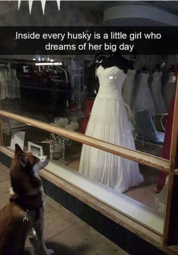 Dress - Inside every husky is a little girl who dreams of her big day