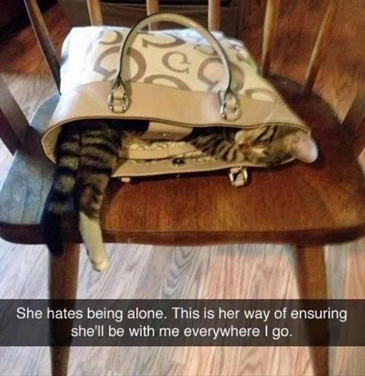 Bag - She hates being alone. This is her way of ensuring she'll be with me everywhere I go.