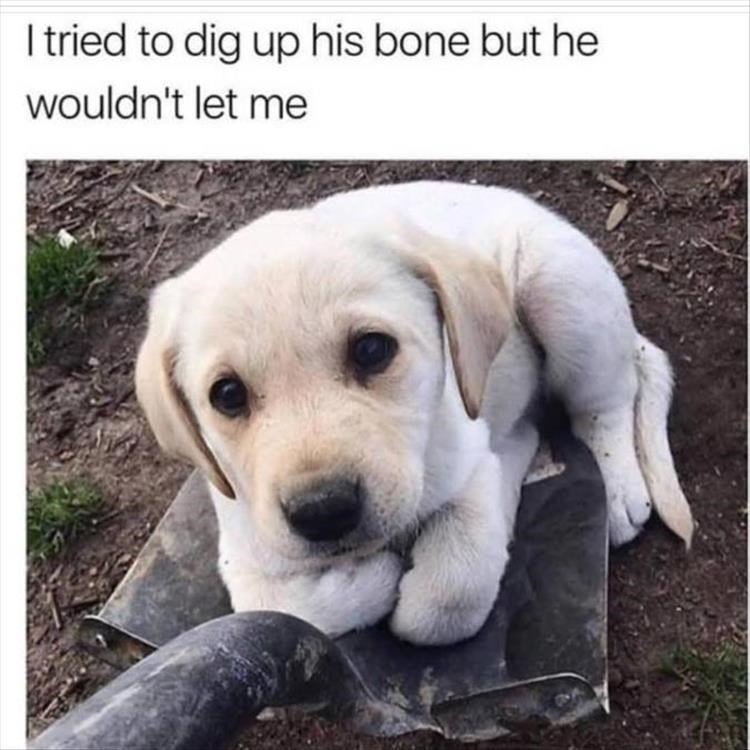 Dog - I tried to dig up his bone but he wouldn't let me
