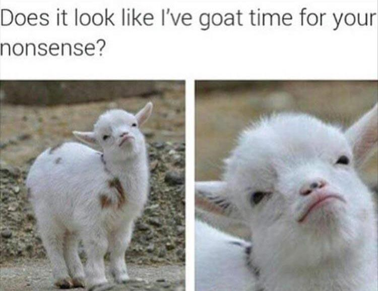 Photo caption - Does it look like I've goat time for your nonsense?