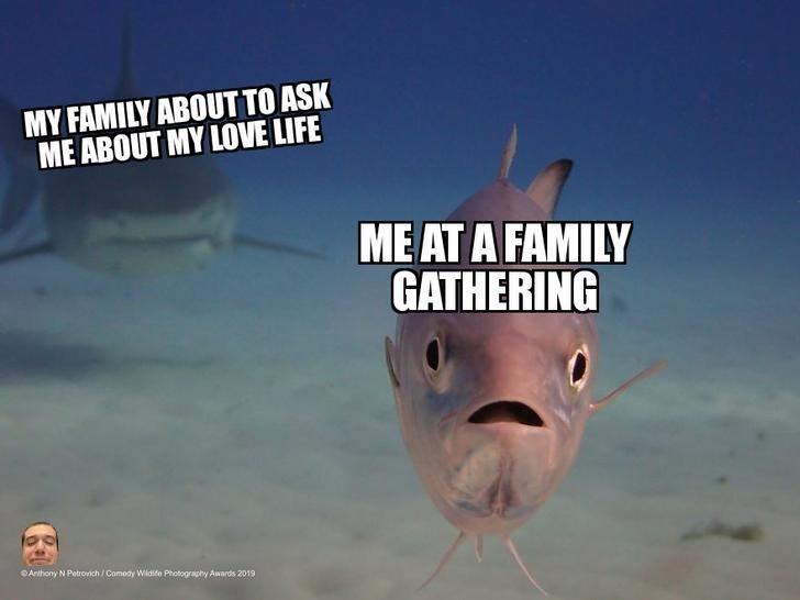 Fish - MY FAMILY ABOUT TO ASK ME ABOUT MY LOVE LIFE MEAT A FAMILY GATHERING Anthony N Petrovich /Comeay Wildife Photography Awards 2019