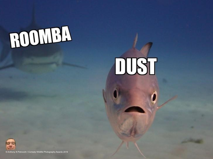 Fish - ROOMBA DUST Anthony N Petrovich /Comeay Wildife Photography Awards 2019