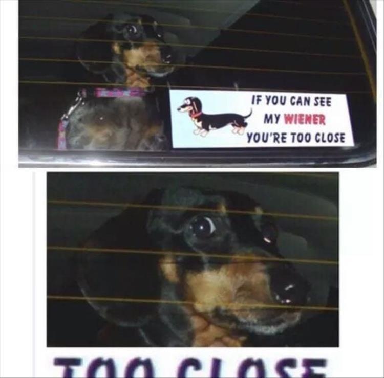 dog memes - 9365008128