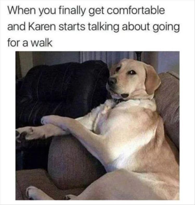 dog memes - 9365010176