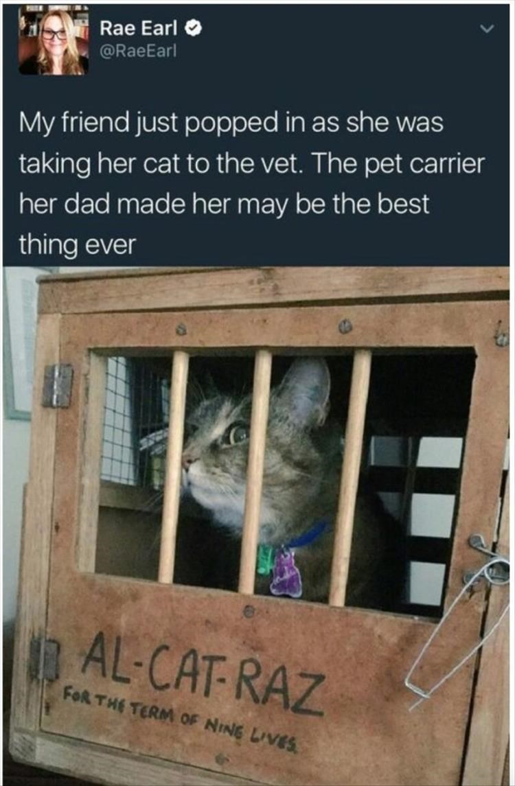cat memes - 9365010944