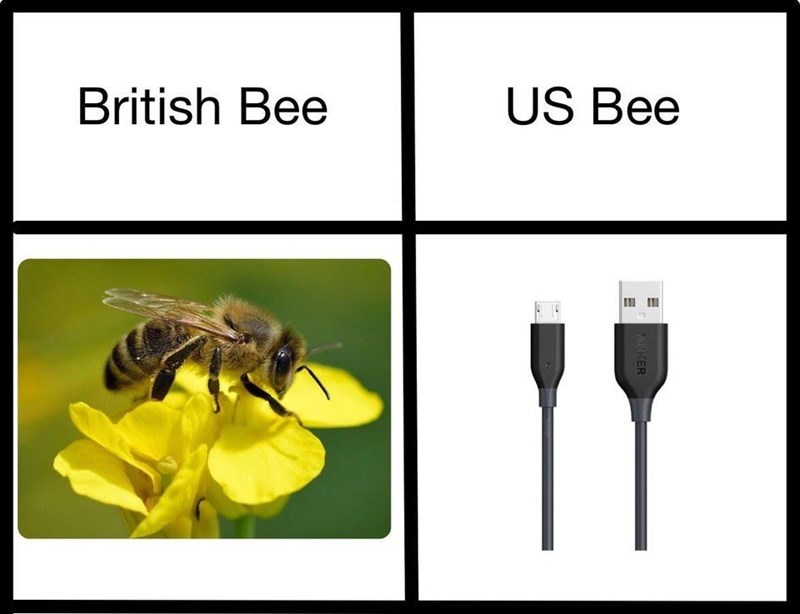 Insect - US Bee British Bee ANKER e