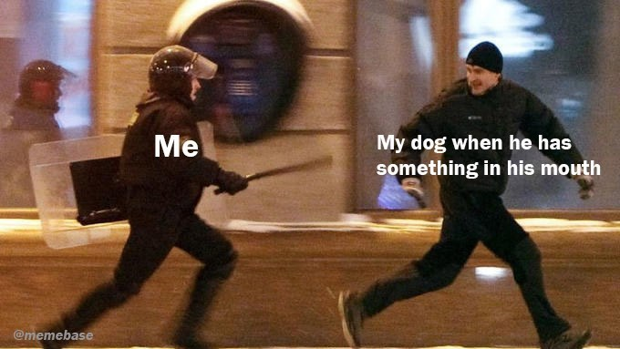 Duel - My dog when he has something in his mouth Me @memebase
