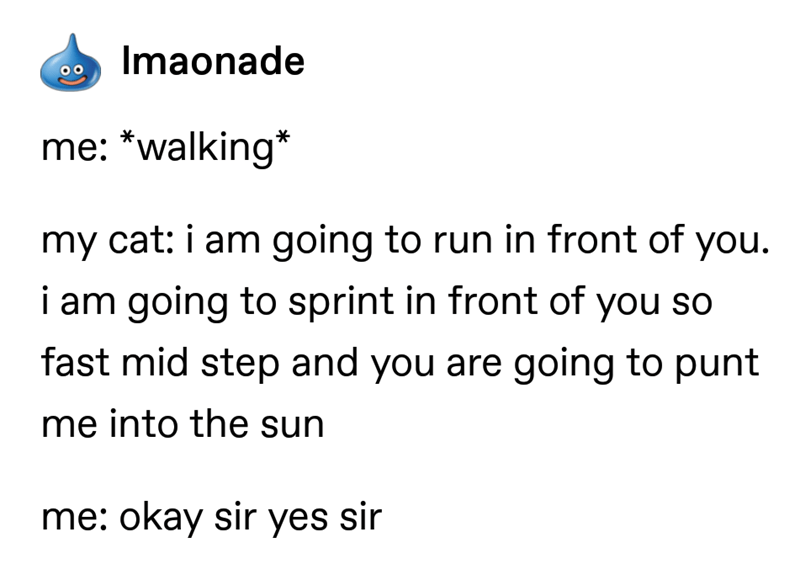 Text - Imaonade me: *walking* my cat: i am going to run in front of you. i am going to sprint in front of you so fast mid step and you are going to punt me into the sun me: okay sir yes sir