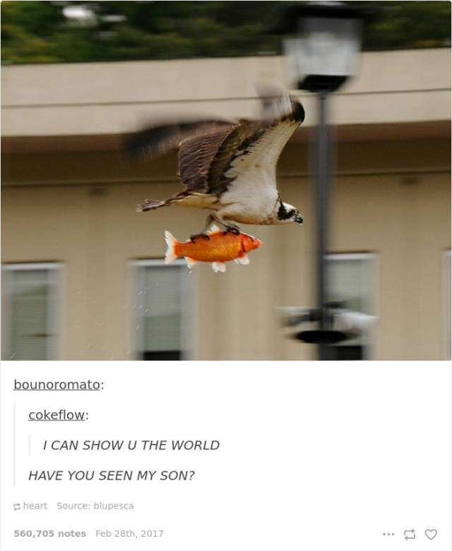 Bird - bounoromato: cokeflow: I CAN SHOW U THE WORLD HAVE YOU SEEN MY SON? heart Source: blupesca 560,705 notes Feb 28th, 2017