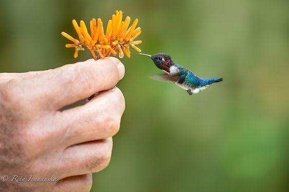 Hummingbird - Rita Ianask