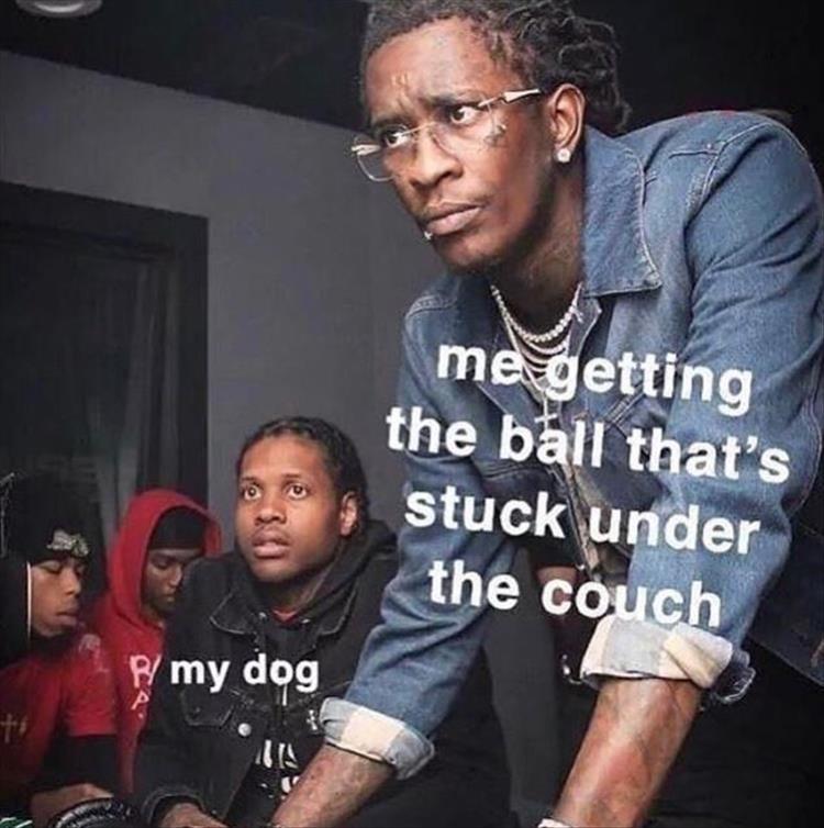 dog memes - 9365544192
