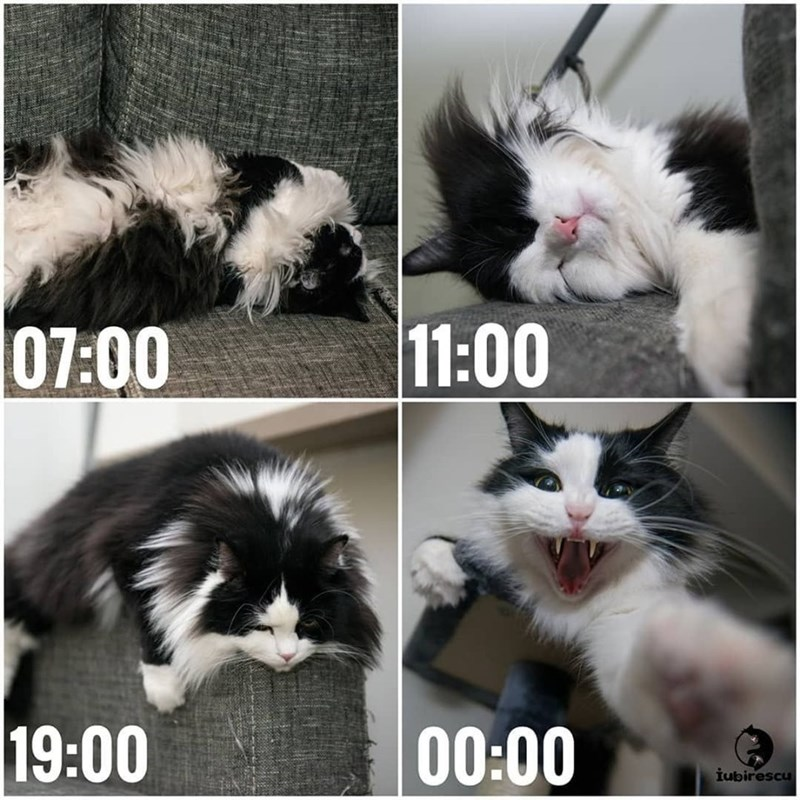cat memes - 9365574912