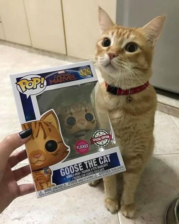 cat memes - 9365576448