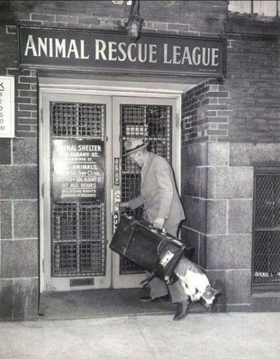 Snapshot - ANIMAL RESCUE LEAGUE NT NAL SHELTER SALRANY ST. oST SANIMALS Free Clinic NDA56AANY ST AT ALL HOURS NG TS HOUDAY