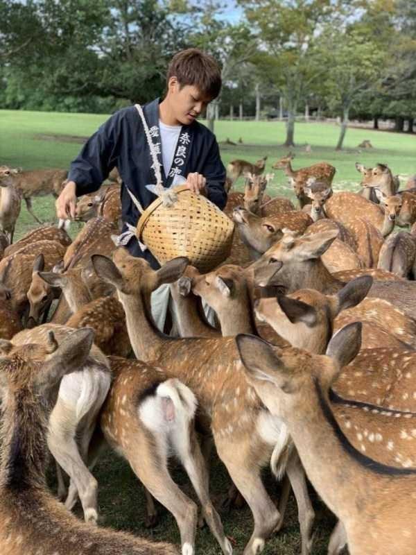 Wildlife - 「奈良の本