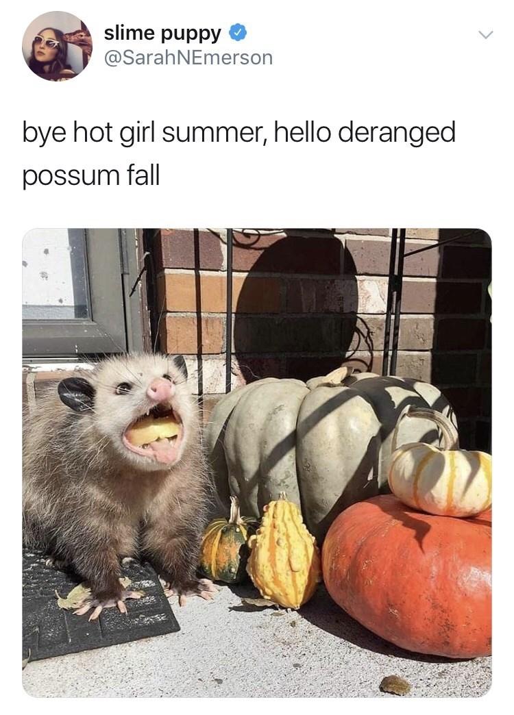 Adaptation - slime puppy @SarahNEmerson bye hot girl summer, hello deranged possum fall