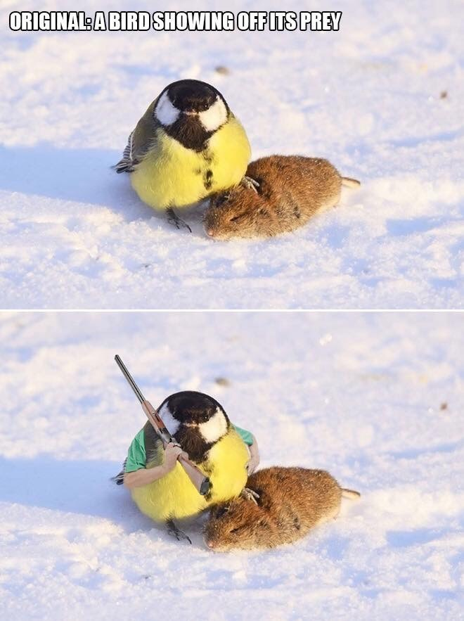 Bird - ORIGINALSA BIRDSHOWING OFFITSPREY