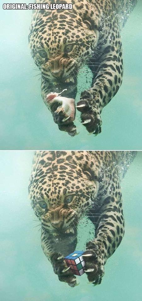 Jaguar - ORIGINAL: FISHING LEOPARD