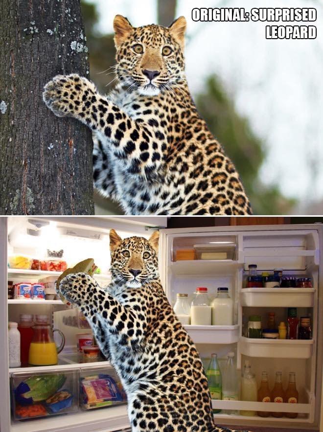 Felidae - ORIGINAL SURPRISED LEOPARD