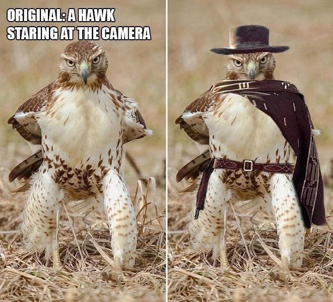 Adaptation - ORIGINAL A HAWK STARING AT THE CAMERA