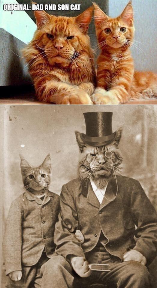 Cat - ORIGINAL: DAD AND SON CAT