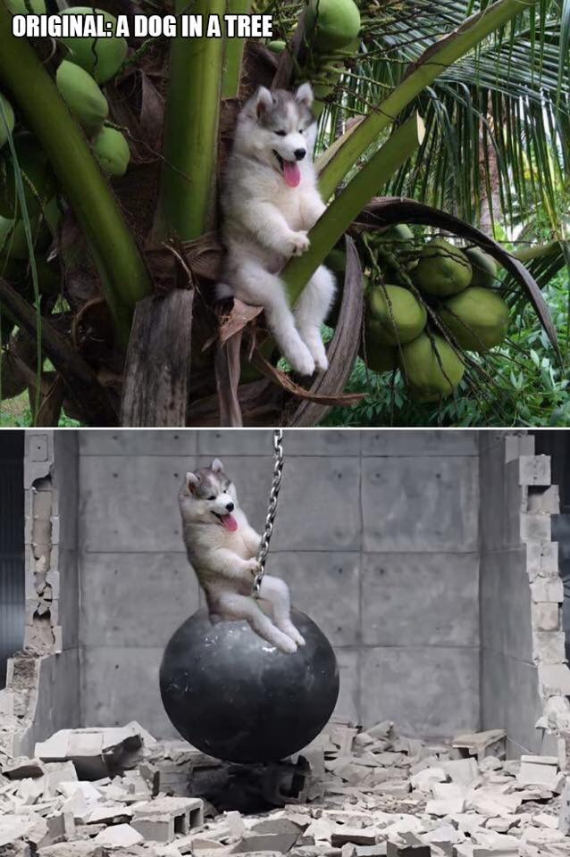 Cat - ORIGINAL A DOG IN A TREE