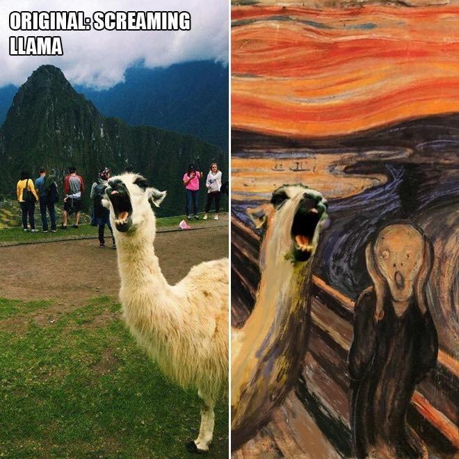 Llama - ORIGINALS SCREAMING LLAMA
