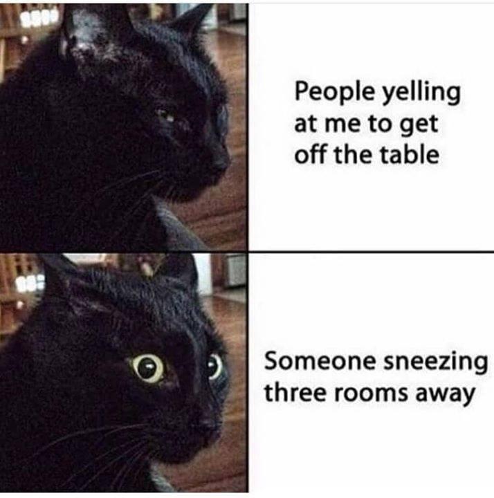 funny cat memes - 9366705920