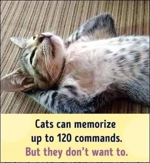 funny cat memes - 9366706688
