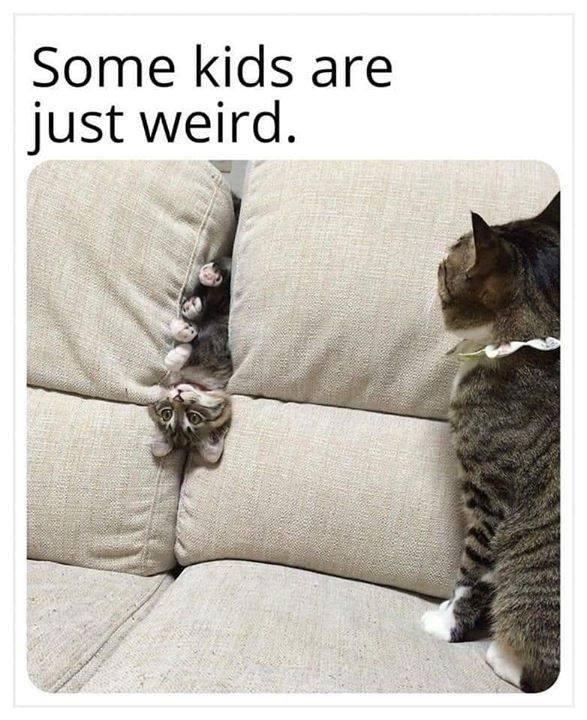 funny cat memes - 9366706944