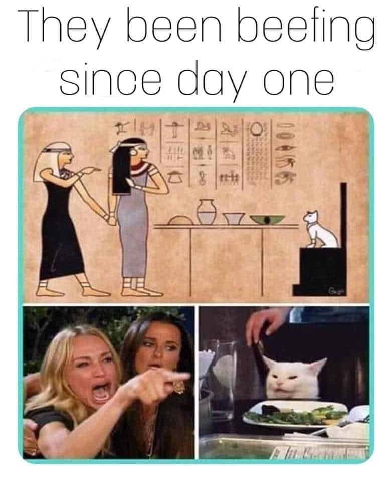 cat memes - 9366707200