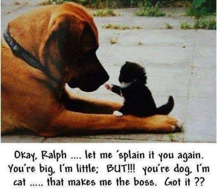 funny cat memes - 9366707456