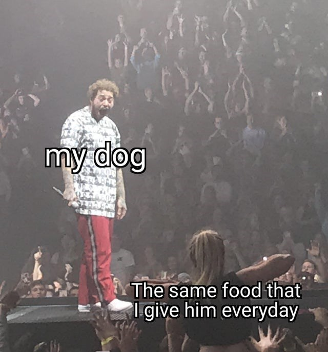 Font - my dog The same food that give him everyday