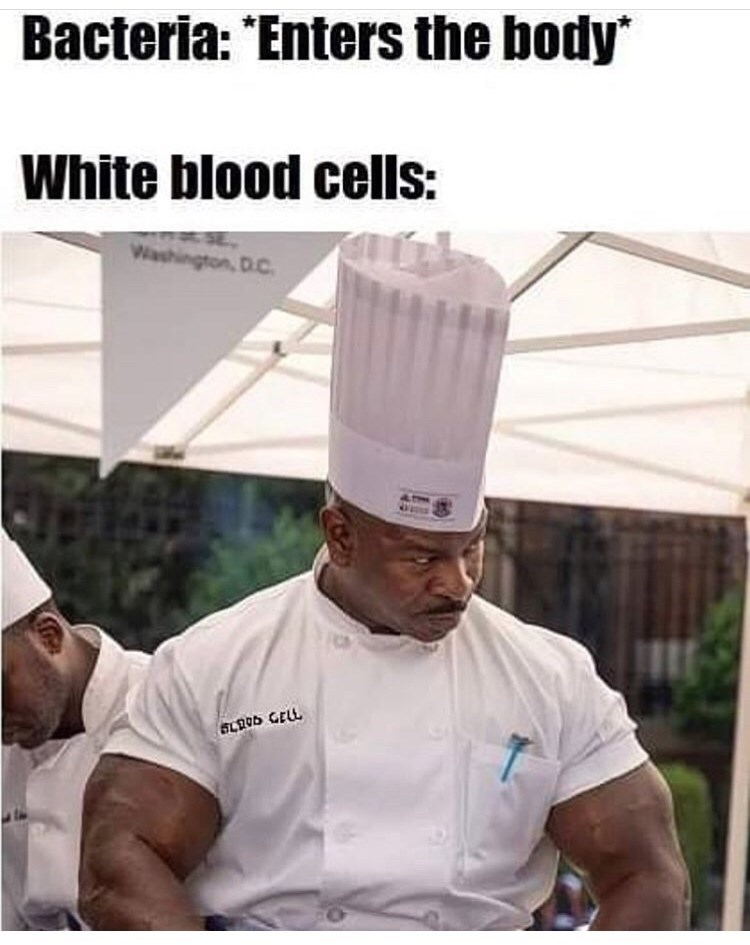 Chef's uniform - Bacteria: 'Enters the body White blood cells: Washington,D.C 64205 GELL
