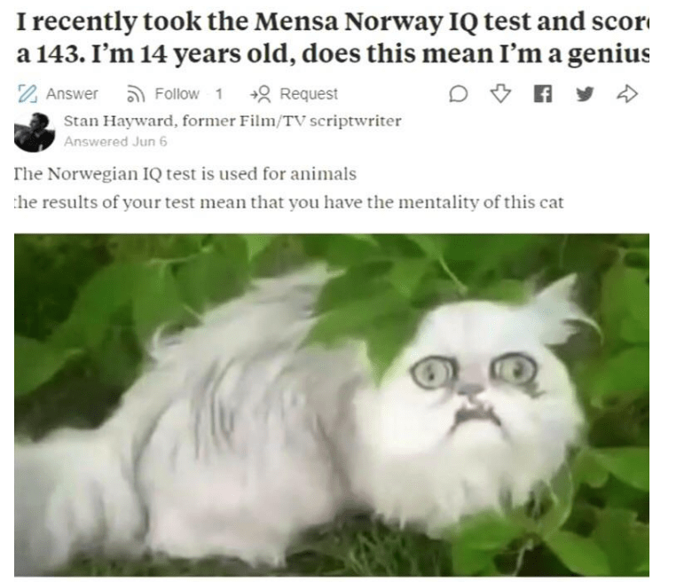 Cat - I recently took the Mensa Norway IQ test and scor a 143. I'm 14 years old, does this mean I'm a genius Answer Follow 1 Request Stan Hayward, former Film/TV scriptwriter Answered Jun 6 The Norwegian I1Q test is used for animals he results of your test mean that you have the mentality of this cat