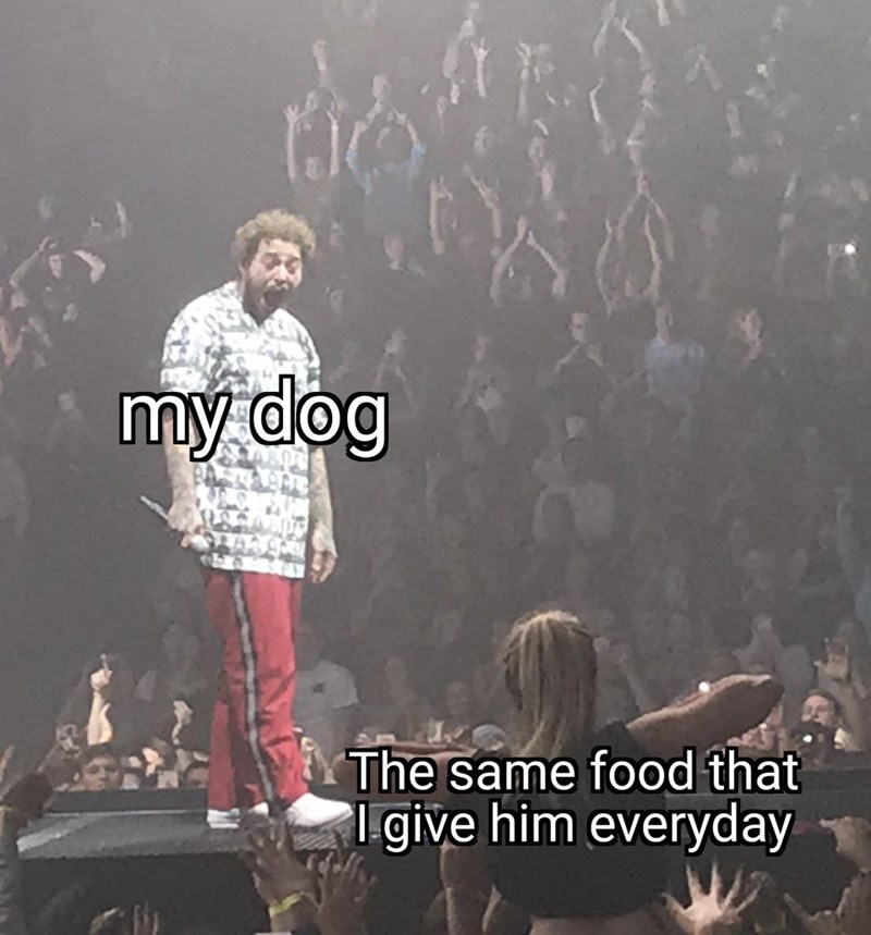 Font - my dog The same food that igive him everyday