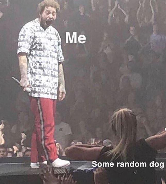 Album cover - Me Some random dog
