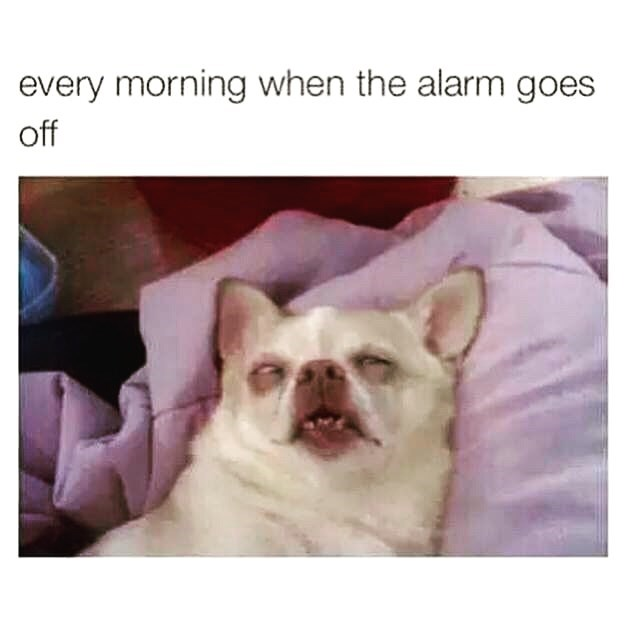 Facial expression - every morning when the alarm goes off
