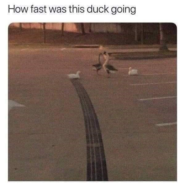 Text - How fast was this duck going
