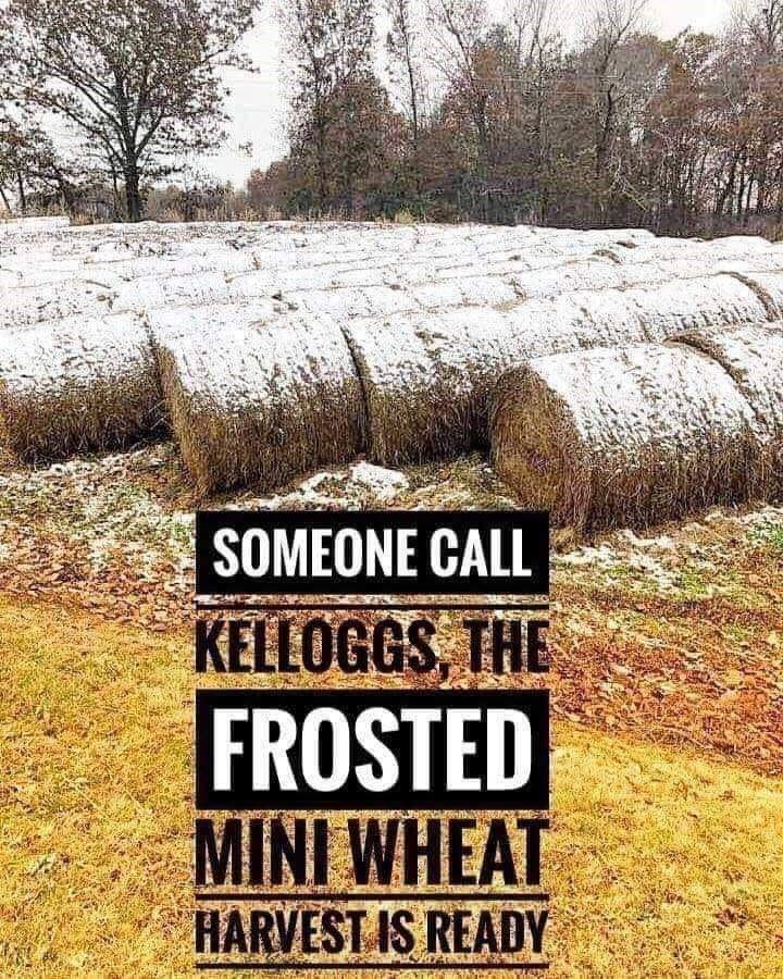 Text - SOMEONE CALL KELLOGGS, THE FROSTED MINI WHEAT HARVESTIS READY