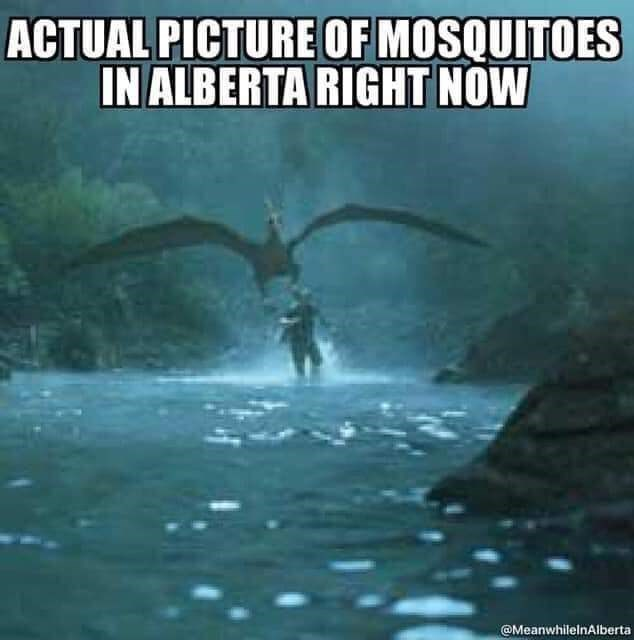 Water - ACTUAL PICTURE OF MOSQUITOES IN ALBERTA RIGHT NOW @MeanwhilelnAlberta