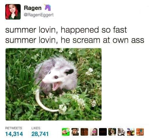 Hamster - Ragen @RagenEggert summer lovin, happened so fast summer lovin, he scream at own ass LIKES RETWEETS 14,314 28,741