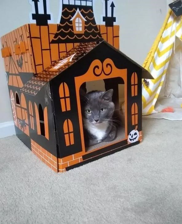 Cat - Co