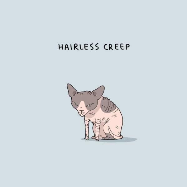 Cat - HAIRLESS CREEP