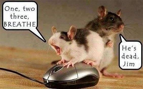 Mouse - One, two three, BREATHE He's dead Jim