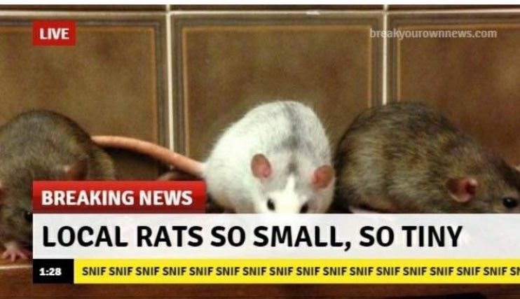 Rat - breakyourownnews.com LIVE BREAKING NEWS LOCAL RATS SO SMALL, SO TINY SIF SNIF SNIF SNIF SNIF SNIF SNIF SNIF SNIF SNIF SNIF SNIF SNIF SNF SNE SNIF S 1:28
