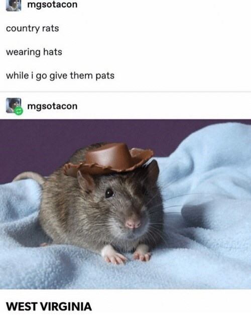 Mammal - mgsotacon country rats wearing hats while i go give them pats mgsotacon WEST VIRGINIA