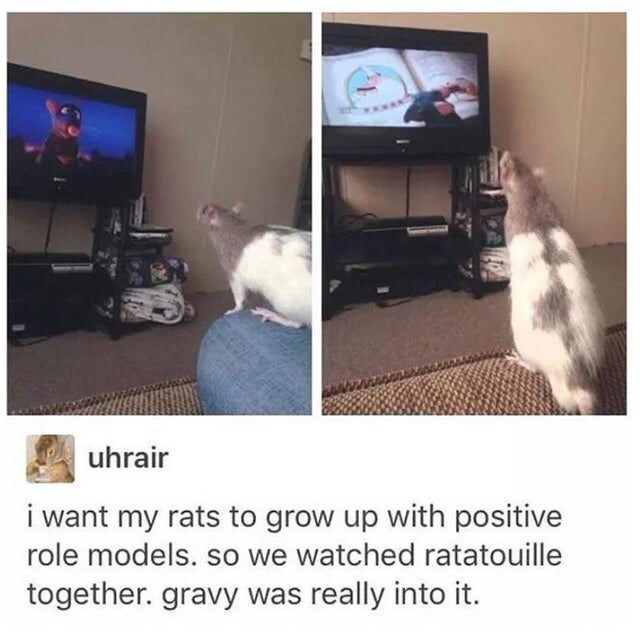 Cat - uhrair i want my rats to grow up with positive role models. so we watched ratatouille together. gravy was really into it.